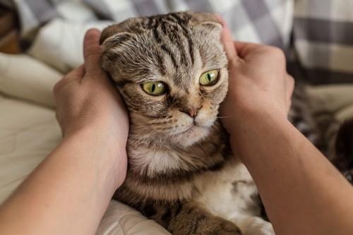 両手で猫を触る