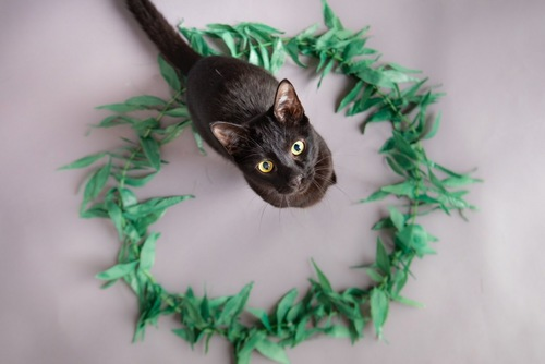 葉のサークルにいる黒猫