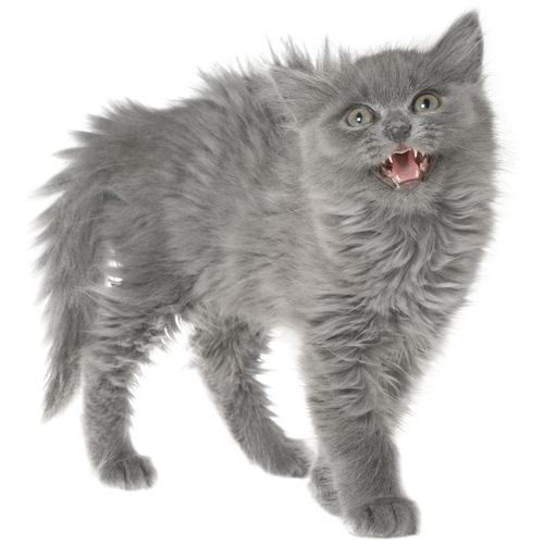 身体中が膨れている猫