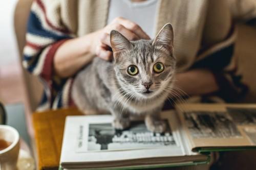 飼い主の読む本の上に乗る猫