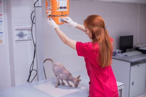 レントゲンを撮る獣医と猫