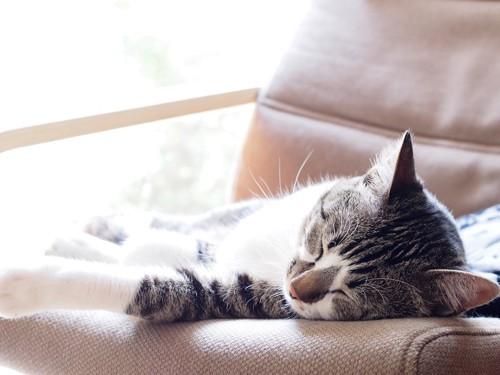 ソファーの上で日向ぼっこしている猫