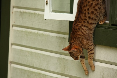 窓から逃げ出す猫