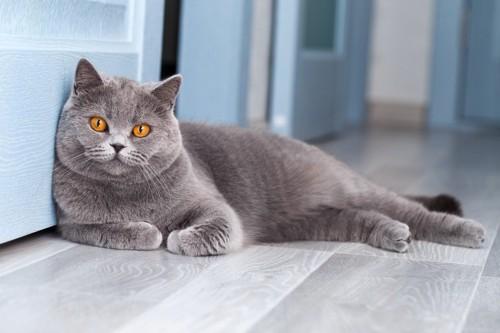 ドアの前で待ちわびる猫