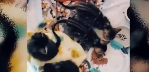 エサを食べる子猫