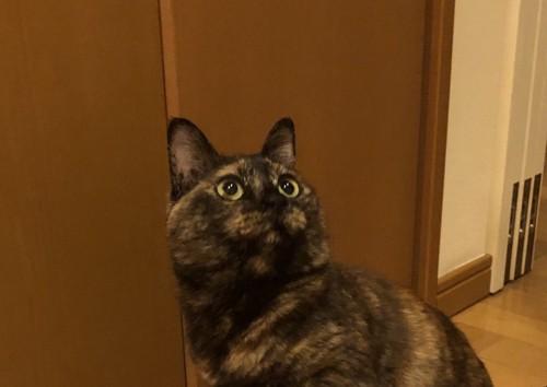 驚き振り向く猫