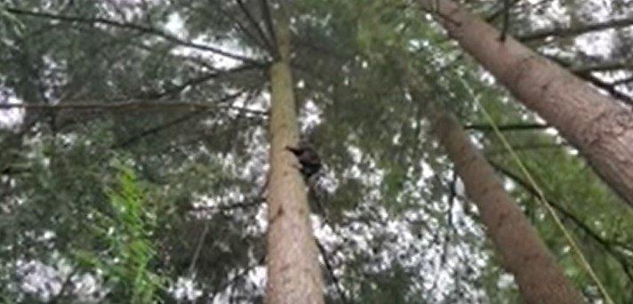 木の上のブーツ
