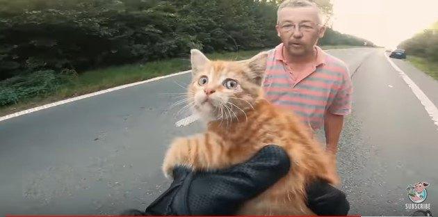 子猫を手に持つ