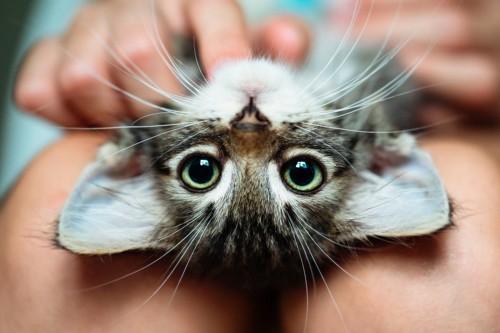 膝の上で見る猫