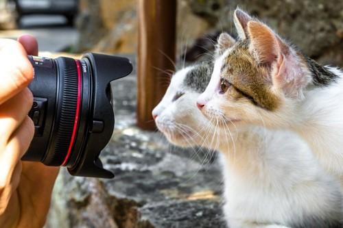 カメラと横向き猫