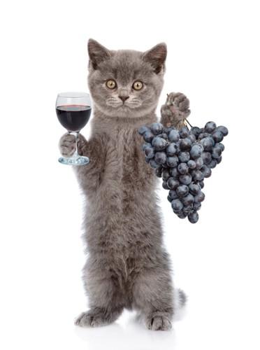 ぶどうとワインを持つ猫