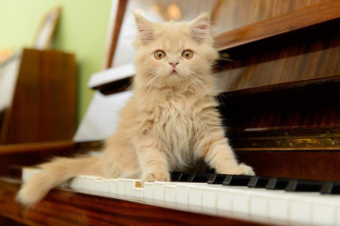 ピアノと猫