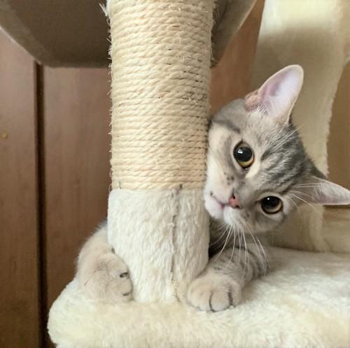 キャットタワーに抱き着く猫