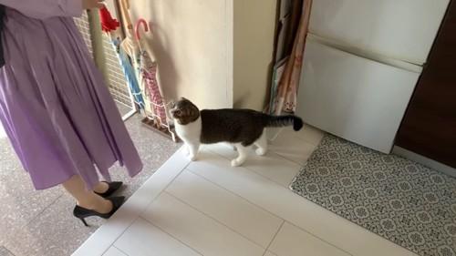 人の足元に立つ猫