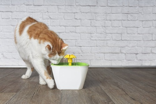 自動給水器から飲む猫