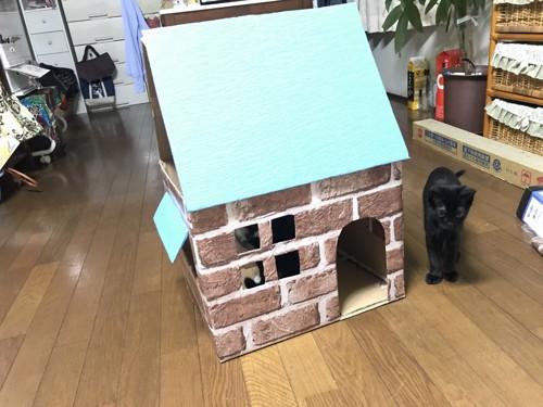 ハウスと猫