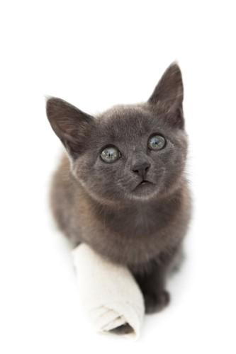 包帯を巻いている子猫