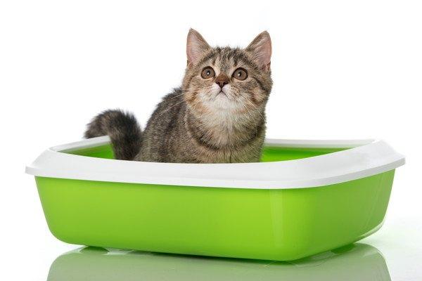 緑色のトイレから見上げる子猫