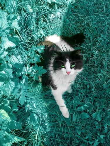 聞き耳を立てている猫