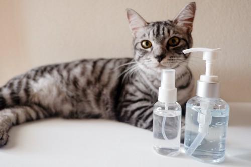 ボトルに入った液体のそばでくつろぐ猫