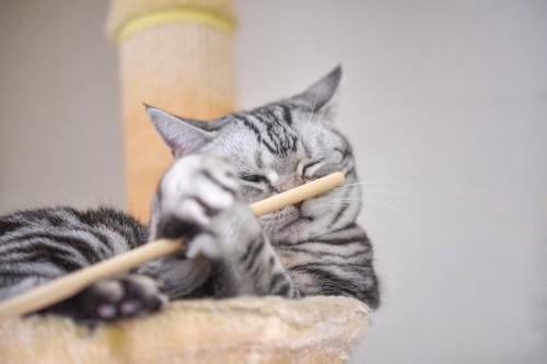 棒を掴む猫