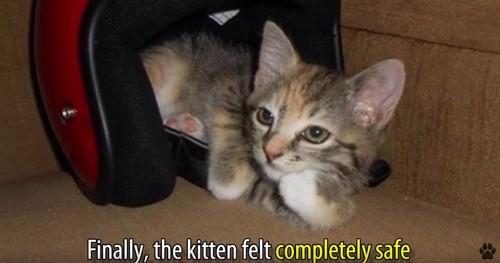 頬杖をついたような猫
