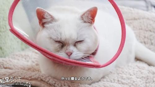 寝ている白猫