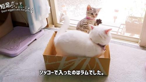 箱の中に入る猫と前足を上げる子猫