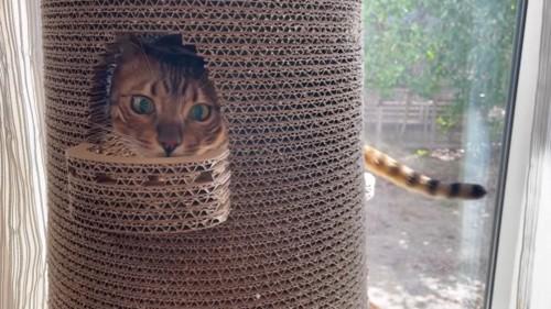 小さな窓から顔をのぞかせる猫