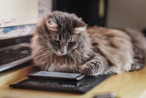 スマートフォンを見つめる猫
