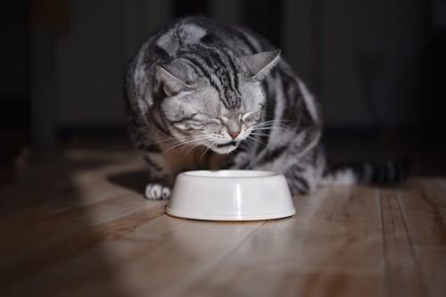 目を瞑りながらご飯を食べる猫