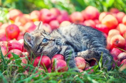 サクランボと猫