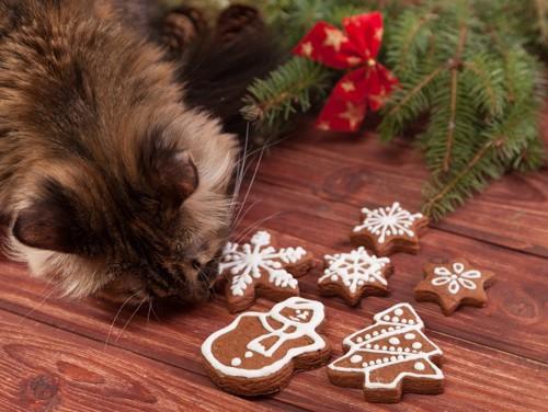 ジンジャークッキーを嗅ぐ猫