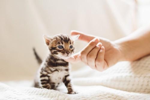 顎を撫でられる子猫