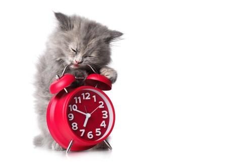 時計をかじっている子猫