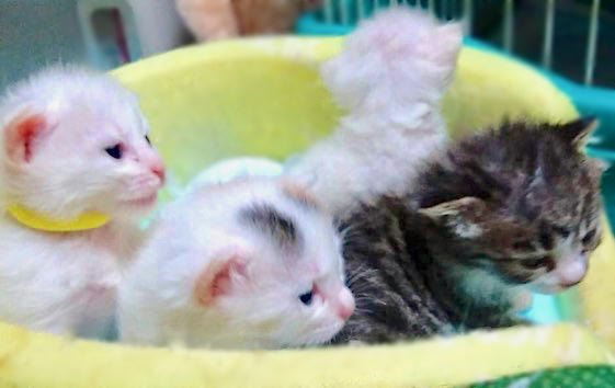 子猫ベッド2