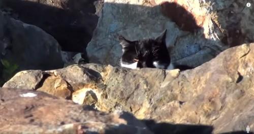 岩の陰に黒猫