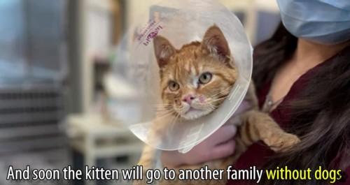 抱っこされるエリザベスカラーをつけた猫