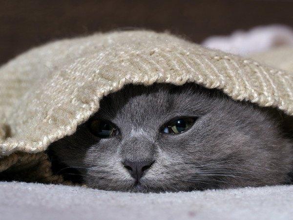 元気の無い猫