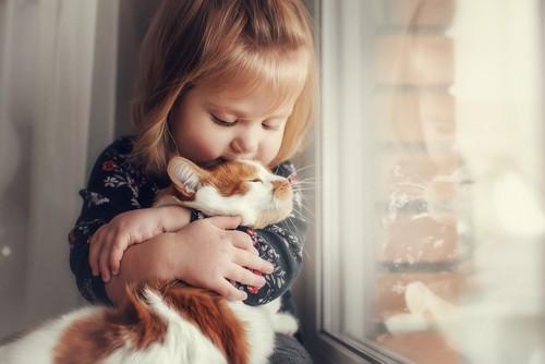 小さい女の子に抱かれる茶トラ白