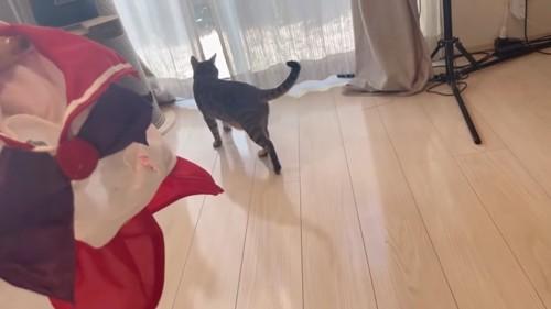 窓に向かって歩く猫