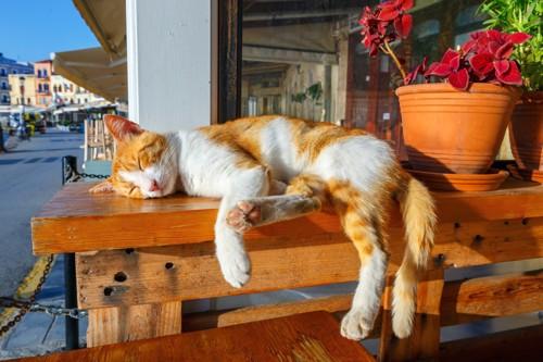日光浴をする猫