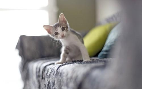 ソファの上にいる子猫