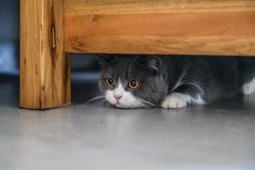 家具の下に隠れて様子を伺う猫
