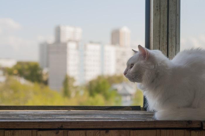 窓の外を眺める猫