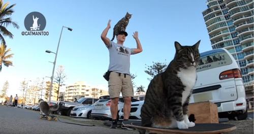 スケボーに乗る猫