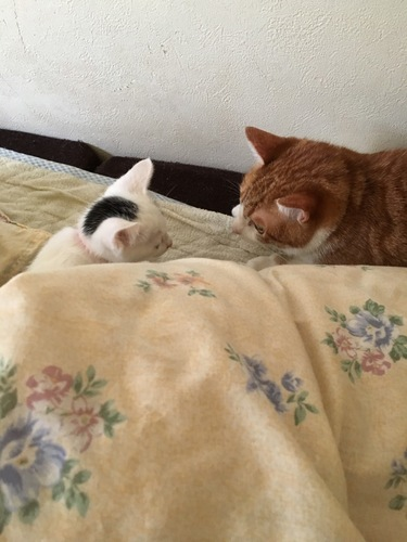 見つめ合う猫