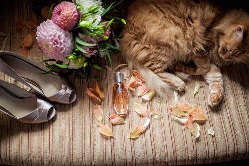 香水や花のそばで眠る猫
