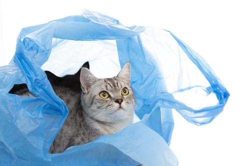 ビニール袋に入る猫