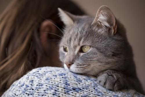 人に寄り添う猫
